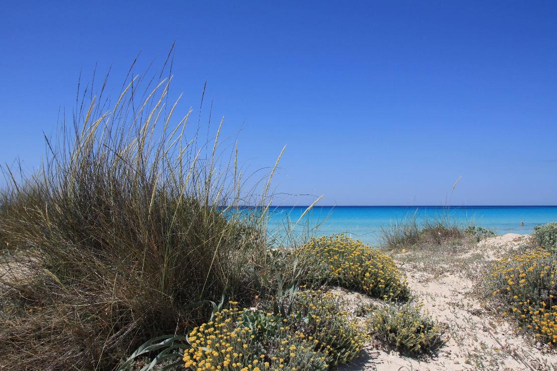 Dünen am Strand von Es Trenc