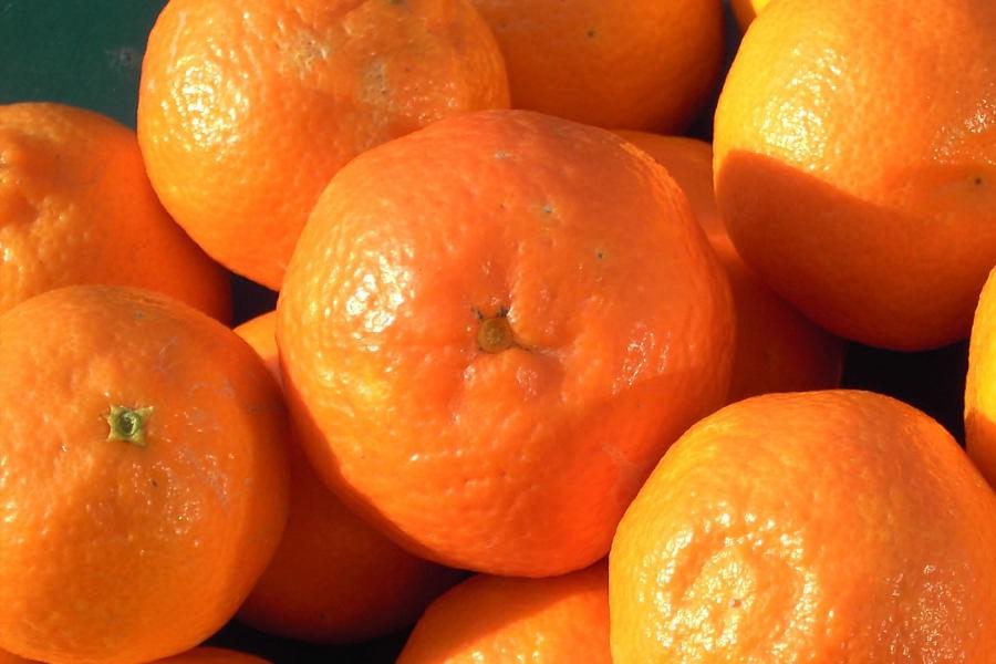 Clementinen von Mallorca