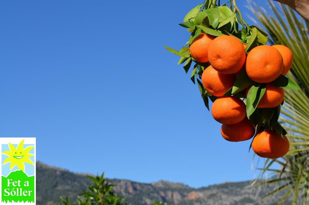 """Orange """"Ortanique"""""""