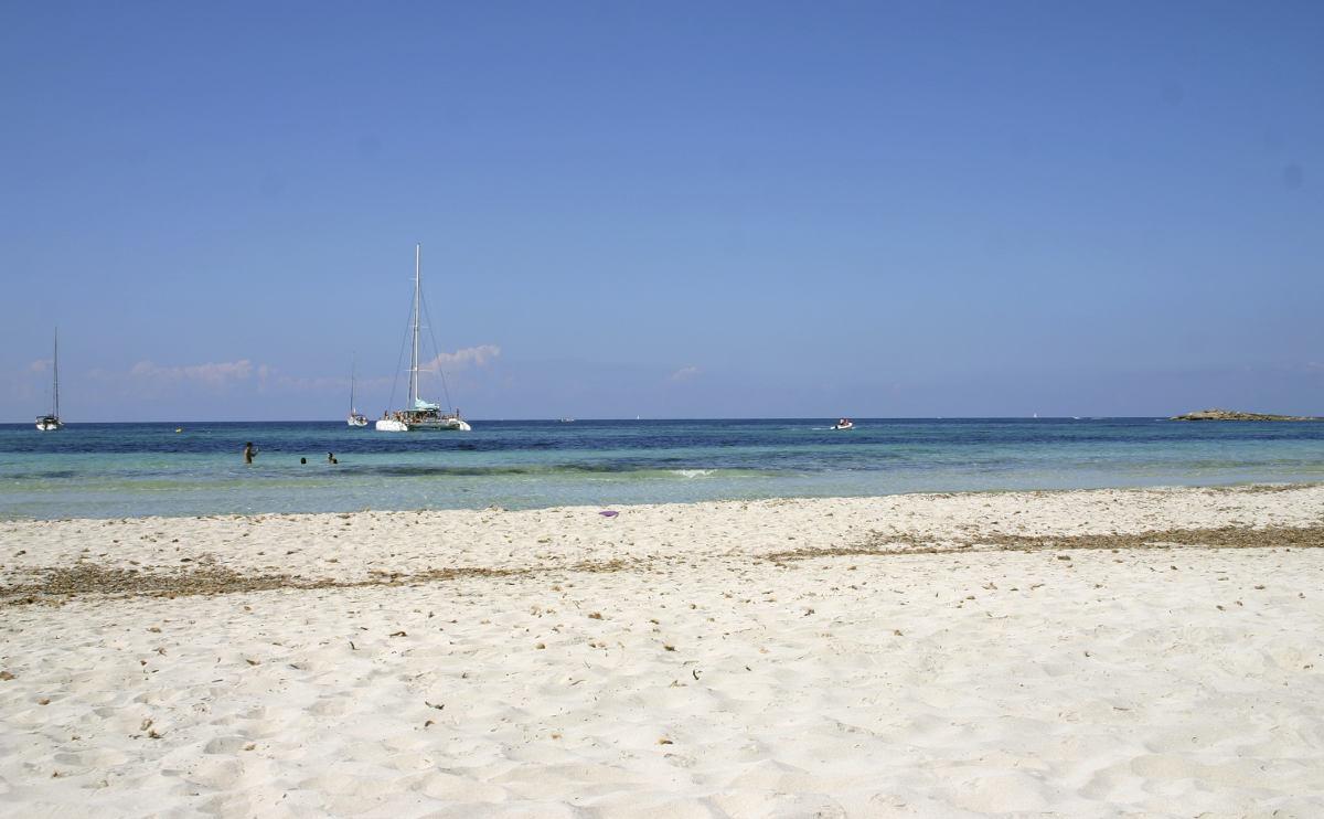 Strand Es Caragol Nacktschnecken und Libellen