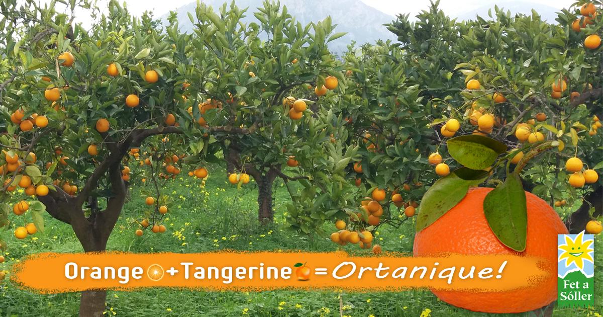 Ortanique - die elegante, die nach Mandarine schmeckt