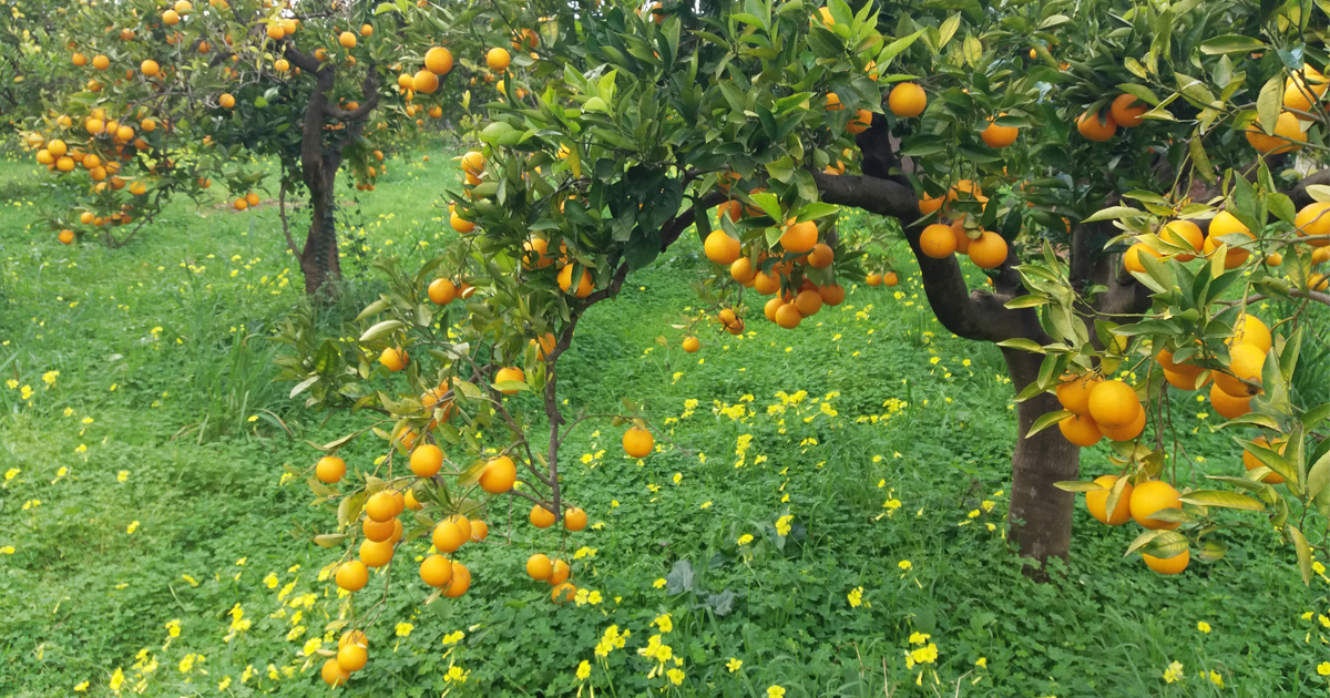 Endspurt der Orangen!