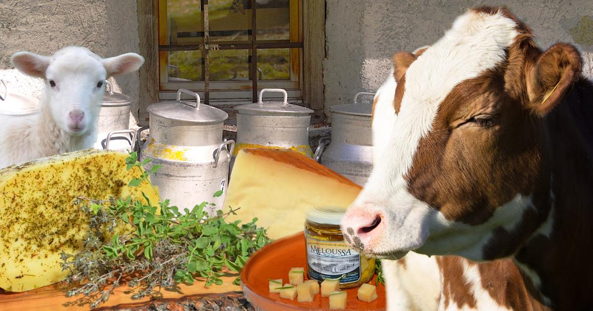 Käse aus Mallorca