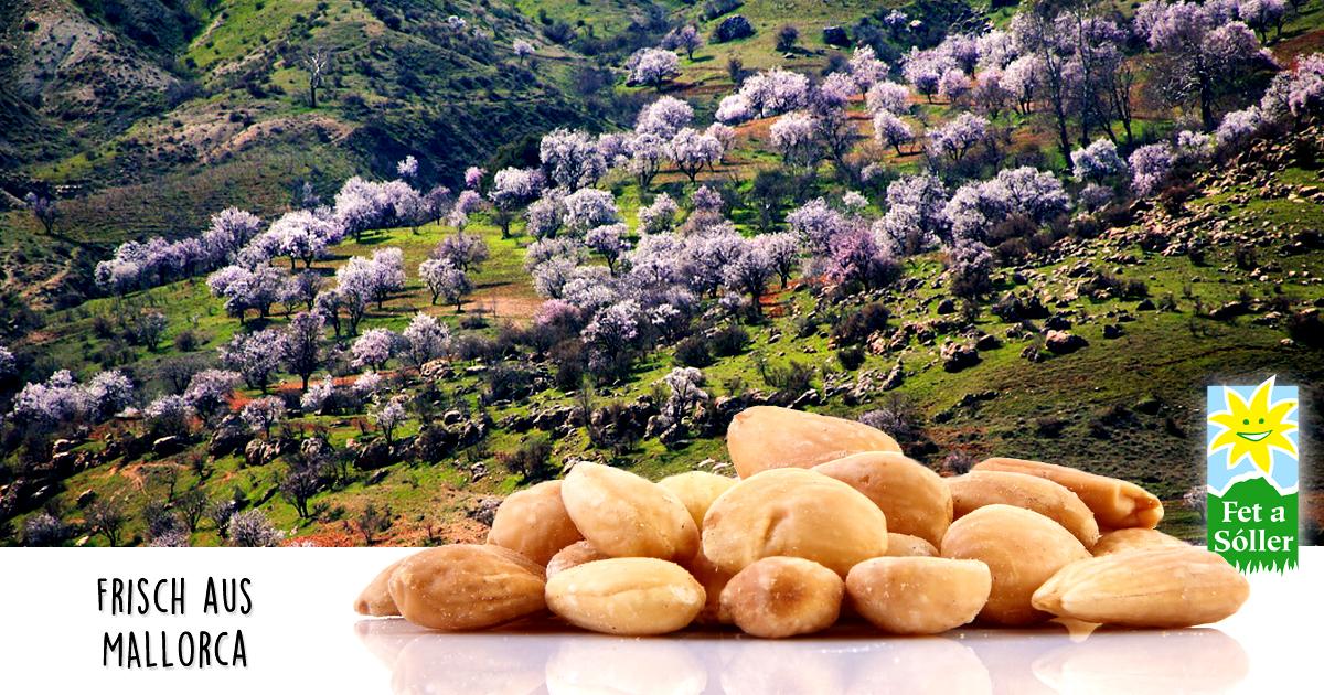 Mallorcas Mandelbäume blühen!