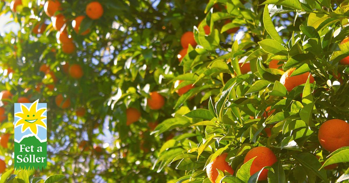 Orangenlieferungen online abonnieren & termingerecht liefern lassen