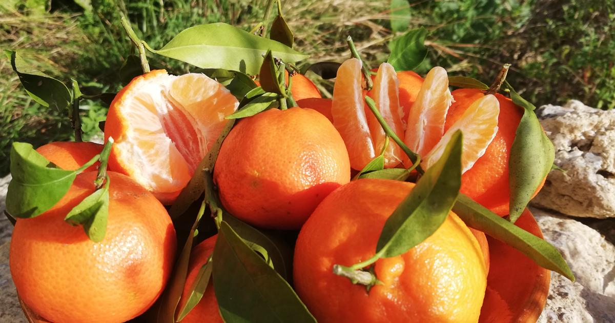 Naturbelassene Clementinen aus Mallorca