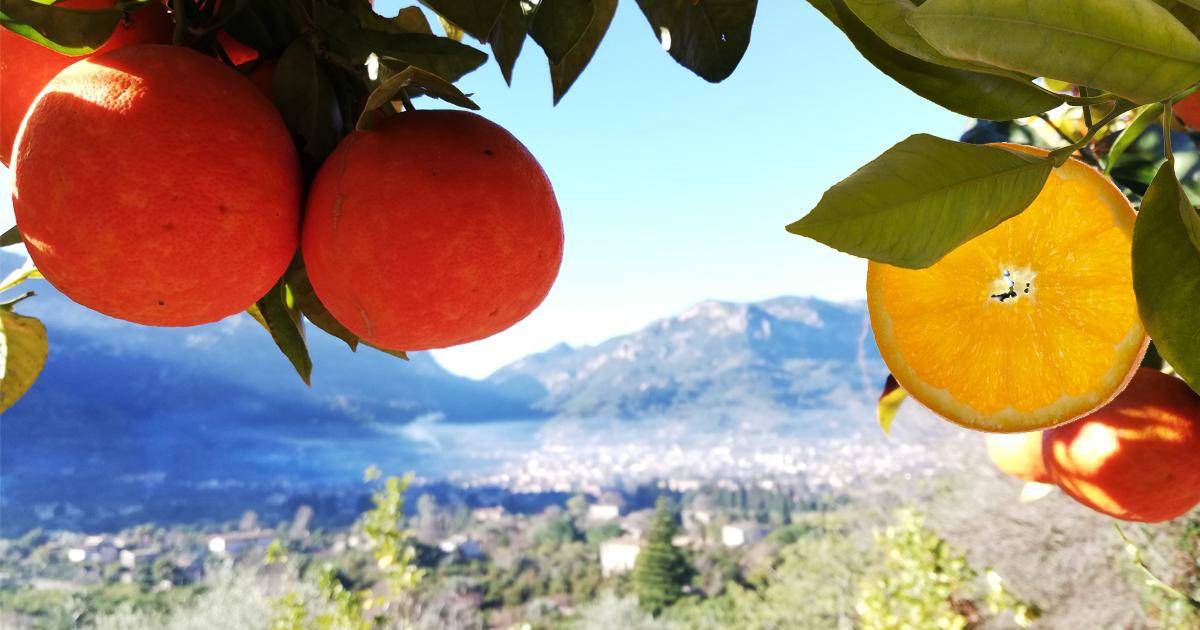 Vitamin C - frisch aus Mallorca!
