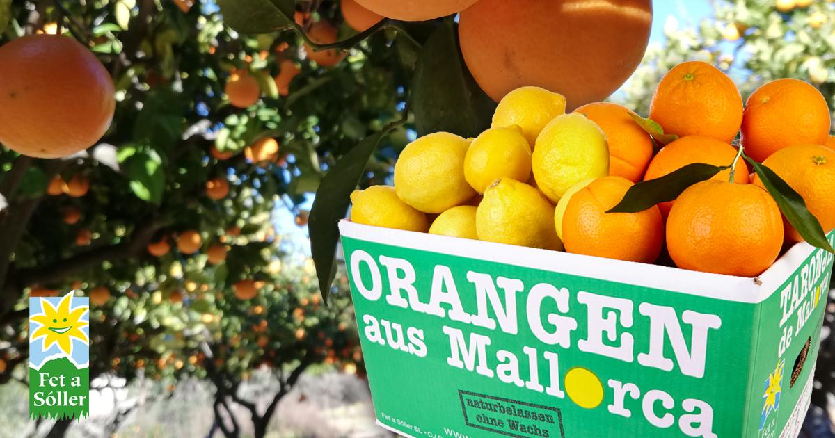 Früchte aus Mallorca